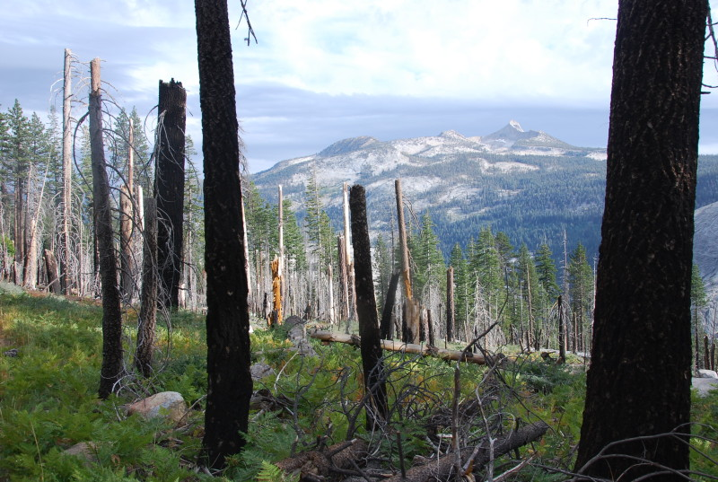 Yosemite backpacking!